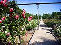 Vista de la rosaleda del parque del Oeste.jpg