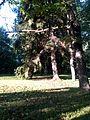 Voore (Saare) 13.jpg