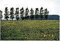 Vroegere standplaats verdwenen houten windmolen - 329665 - onroerenderfgoed.jpg