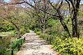 Walkway - Institute for Nature Study, Tokyo - DSC02141.JPG