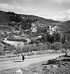Walter Mittelholzer. Garten Gatsehmane, Jerusalem. 1934 (z eth 0253041).jpg