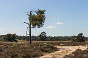Wandeling over het Hulshorsterzand-Hulshorsterheide 009.jpg
