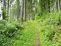 Wanderweg - panoramio (10).jpg