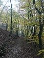 Wanderweg Urwaldsteig - panoramio.jpg