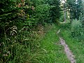 Wanderweg bei Pfalzgrafenweiler - panoramio (2).jpg
