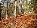 Wanderweg im Schönbuch - panoramio.jpg