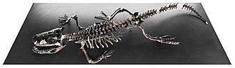 Paleocene - Wannaganosuchus, a crocodilian from the Paleocene.