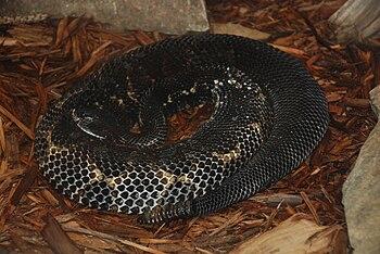 English: Reptiles in Smithsonian National Zool...