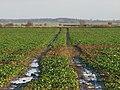 Waterlogged Field - geograph.org.uk - 1072676.jpg