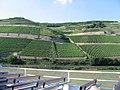 Weinberge nahe Bingen am Rhein - geo.hlipp.de - 1499.jpg