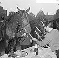 Wereld Dierendag 1964 , het voeren der dieren (buitenland), Bestanddeelnr 916-9721.jpg