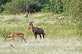 Western Serengeti 2012 06 03 3922 (7557788128).jpg