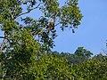 White-taild Eagle - Haliaeetus albicilla - P1030254.jpg