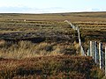 Whitfield Moor - geograph.org.uk - 580617.jpg