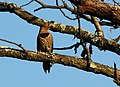 Wildlife birds 8 - West Virginia - ForestWander.jpg