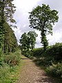 Winkleigh Wood - geograph.org.uk - 480092.jpg