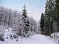 Winter im Teutoburger Wald26.jpg
