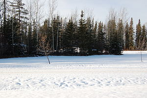 English: Winter scenery in northern Alberta, C...