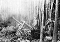 Wojska niemieckie podczas walk o las Hurtgen (2-423).jpg