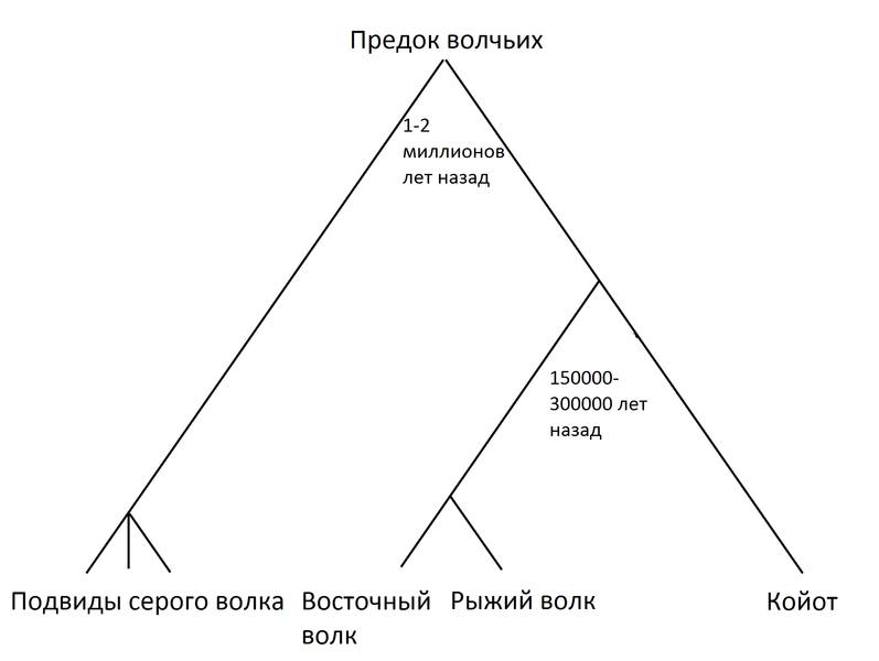 File:Wolf-evolution.ru.png