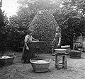 Women, yard, basket, tub, washing, well, kitchen stool Fortepan 17519.jpg
