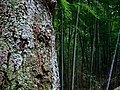 Wood surface and bamboo at Saiko-in, Tsukuba - panoramio.jpg