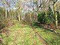 Woodland Track. - geograph.org.uk - 356488.jpg