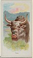Yak, from the Wild Animals of the World series (N25) for Allen & Ginter Cigarettes MET DP836520.jpg