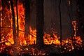 Yugansky nature reserve fire (7938021666).jpg