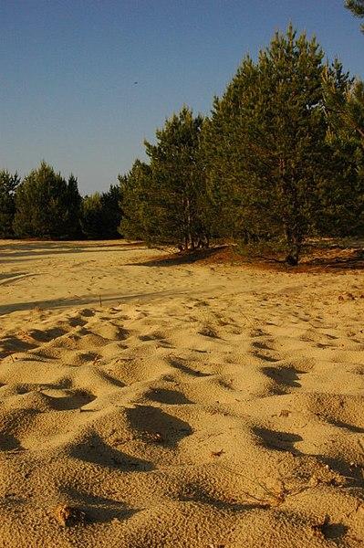 Viate piesky na Záhorí