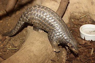 Pangolin trade Illegal poaching, trafficking, and sale of pangolins, parts of pangolins, or pangolin-derived products