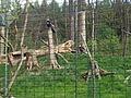 Zoo Zlín, sup chocholatý.JPG