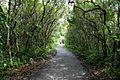 """""""Corredor"""", trilha cercada e fechada no parque ilha do mel.jpg"""
