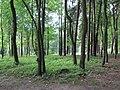 (PL) Polska - Warmia - Park Jakubowy w Olsztynie - The Jacob Park in Olsztyn (28.VIII.2012) - panoramio.jpg