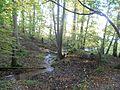 Źródła Kielarskie koło Olsztyna, blisko leśniczówki Zazdrość - panoramio.jpg