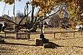 Історико-культурний комплекс 700-річний Запорозький дуб Власне дуб 05.JPG