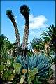 Ботанический сад Пинья де роса - panoramio (2).jpg