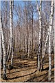 Весна на Южном Урале. - panoramio (4).jpg