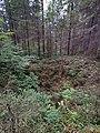 Воронка в лесу ППИ.jpg