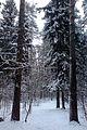 Зима в парке - panoramio.jpg