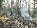 Канельярви- Заходское , низовой пожар 2006 - panoramio - Dmitriy Alekseenkoff.jpg