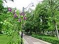 Кольцовский сквер в мае - panoramio.jpg