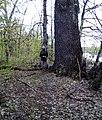 Ландшатний заказник на лівому березі озера Конча (42).jpg