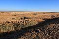 На границе с Казахстаном - panoramio.jpg