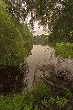 Озерні краєвиди Сосниці.jpg