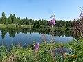 Озеро за сибирятским - panoramio.jpg