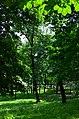 Парк Берёзовая роща в Киеве. Фото 43.jpg