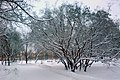 Парк им. Федорова - panoramio - Дмитрий Мозжухин (1).jpg