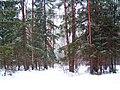 Российская зима - panoramio (2).jpg