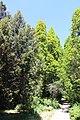 Сирецький дендрологічний парк IMG 7750.jpg